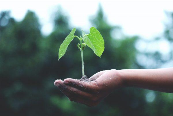 Nachhaltige Last-Mile-Logistik – Symbolbild einer Hand, die eine kleine Pflanze hält